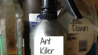 DIY Ant Spray & Ant Repellent