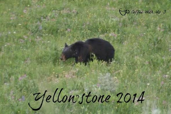 postcard-bear