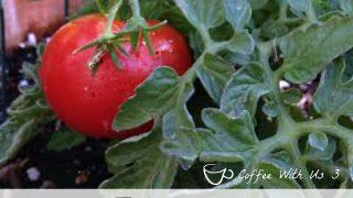 20+ Tomato Recipes