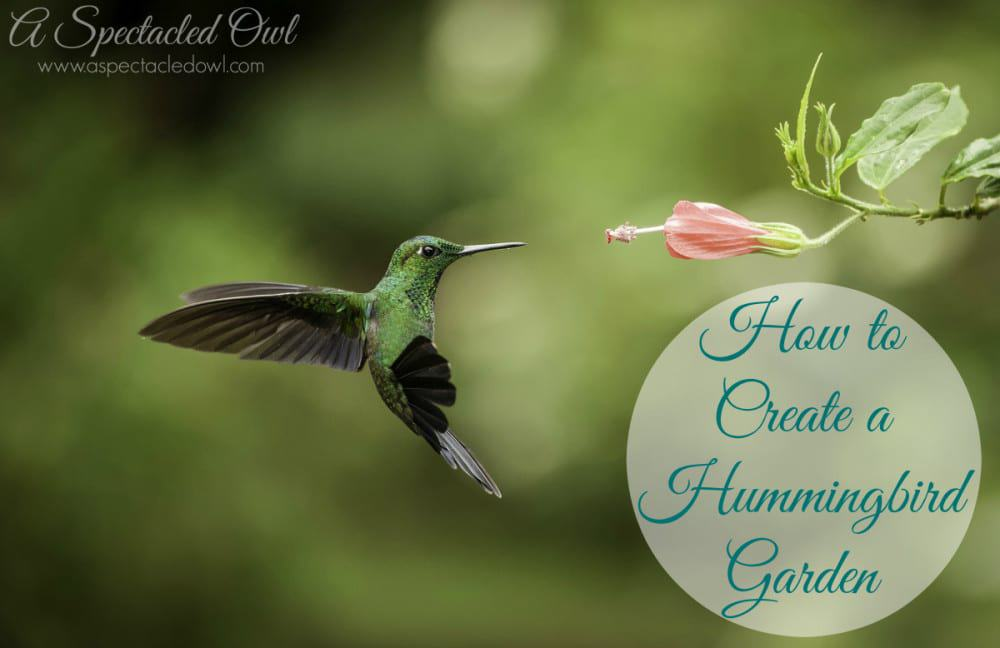 HowtoCreateaHummingbirdGarden1-e1424652384289