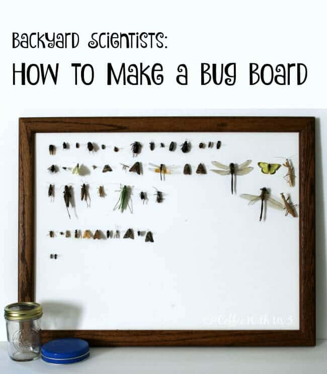 DIY Bug Board