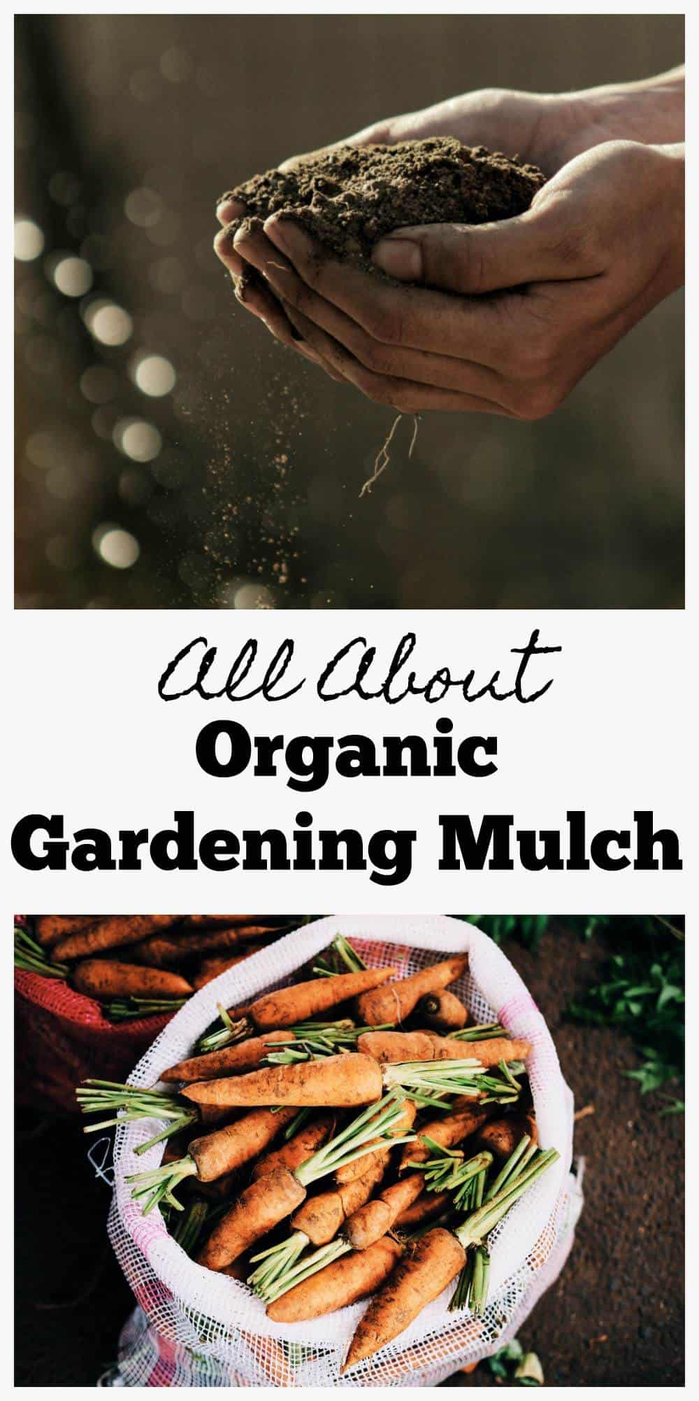 All about Organic Gardening Mulch.  Preparing and applying organic gardening mulch, use of it around vegetable gardens, and how to make organic pesticide.